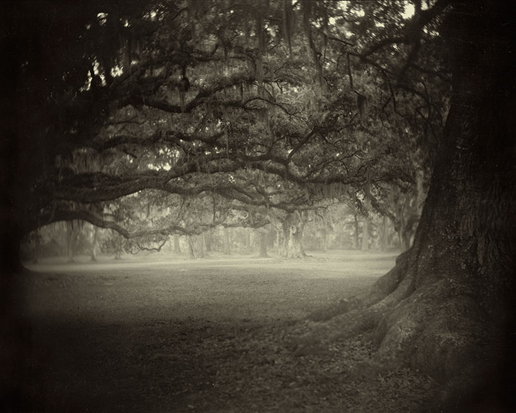 Untitled (Deep South #3) by Sally Mann (1998)