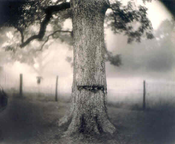 Scarred Tree (Deep South #1), by Sally Mann (1998)